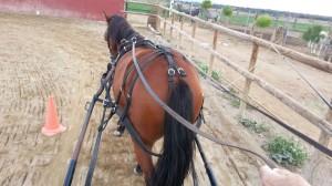 Enganche de caballos